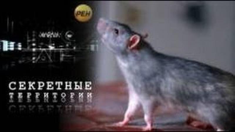 Секретные территории Крысы Подземный разум 05 08 2015 HD