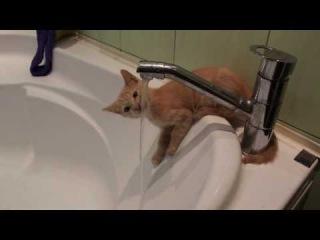 Любопытный котенок