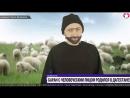 Баран с человеческим лицом Интервью овцевода