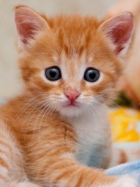 глазки я хочу картинки про животных пожалуйста уже последний