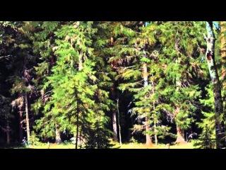 С Губайдулина Звуки леса