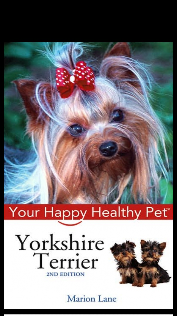 Yorkshire Terrier Your Happy Healthy pet
