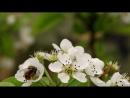 Документальный фильм BBC Британские Времена Года Весна The Great British Year 2 Spring 2013