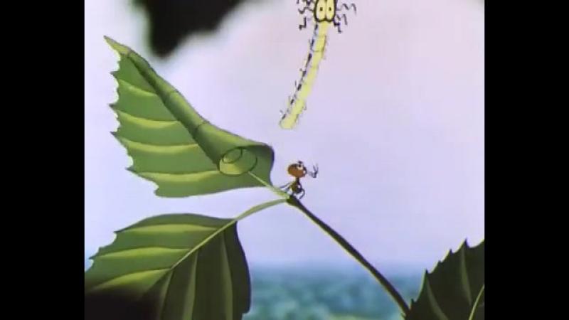 Путешествие муравья Мультфильмы для взрослых online video