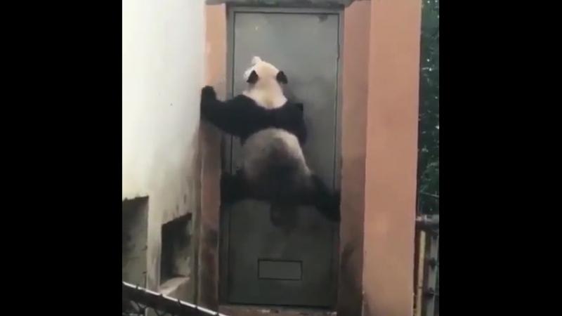 Дорогая, открой, я тверёзый...!