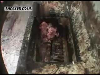 Производственная мясорубка...или как быстро мясо перерабатывают для фарша в колбасу и тд.