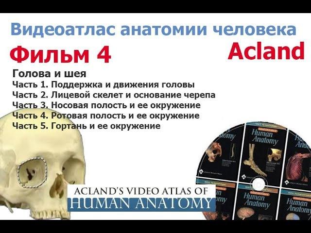 Фильм 4 целиком Анатомия головы и шеи 1 Атлас Акланда