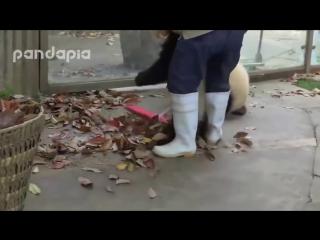 уборщица дворник борется с пандами:)))