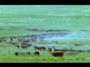 BBC Жизнь млекопитающих The Life of Mammals 2002 2003 04 Травоядные