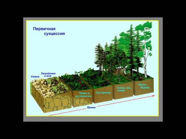 Презентация Экологические сукцессии