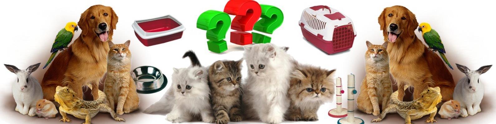 картинки с кормами для домашних животных медицинское оборудование, разнообразные