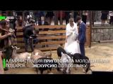 В Московском зоопарке состоялась первая свадьба