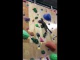 Кот забирается по стене для скалолазания