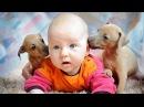 Самые смешные Приколы Дети и Животные!