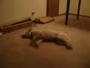 Кошмарный сон у собаки (Сабака Уебака хД)