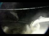 Изопод против Акулы