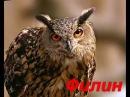 Развивающие мультики для детей по Доману от 1 3 лет Птицы для детей часть 2