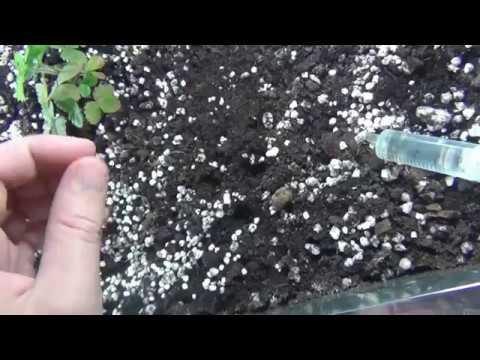 Гроубокс ( GrowBox ) Оп) Садим гарох, памидорку, марковку и арбузик
