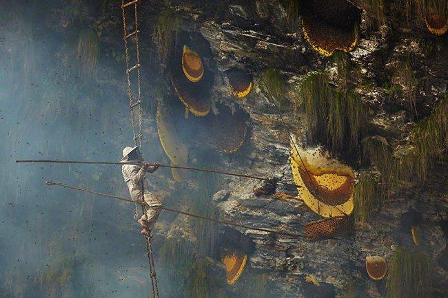 Сбор дикого мёда в Непале, изображение №10