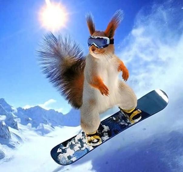 далекие времена, прикольные открытки фото лыжи веселой