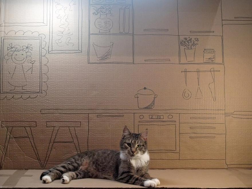 Петербургские котики - лучшее лекарство от стресса.