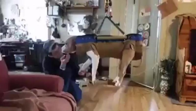 Как стричь ногти собаки? Вот как...)😊