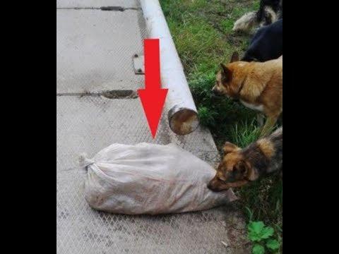 Собаки обнюхивали мешок, в котором что-то шевелилось. Когда мешок вскрыли, то...