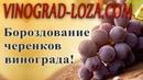 Бороздование черенков чубуков винограда