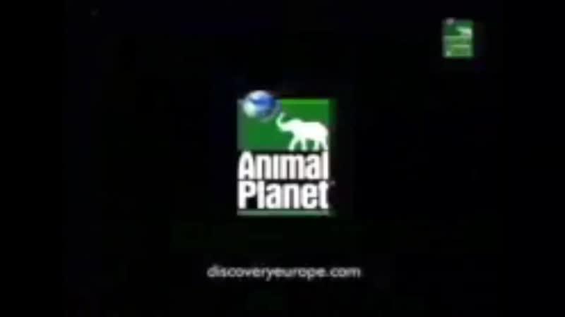Заставка канала Animal Planet 2000 2004 г