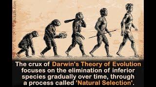 Ravi Zacharias on Atheistic Evolution