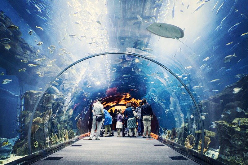 Крупнейший в мире аквариум в ТРЦ Дубай Молл, ОАЭ, изображение №4
