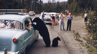 A road trip across the United States of America in 1955 | in color