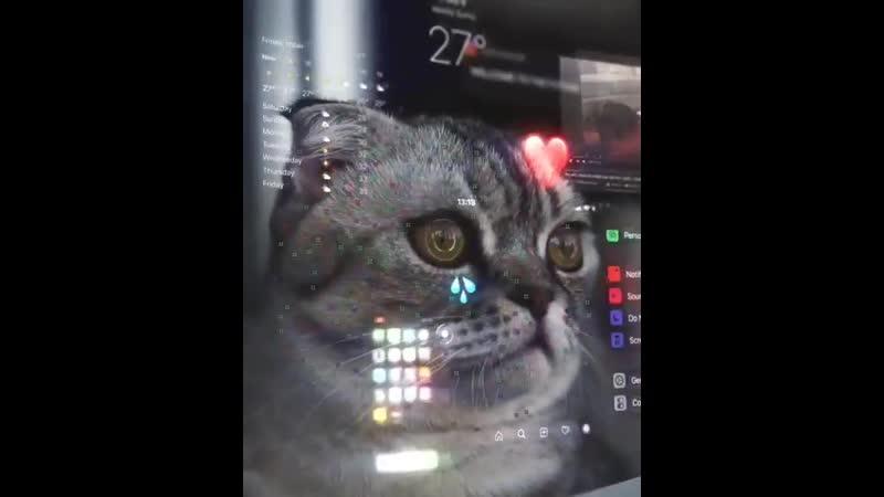 Cat by eduard_ov
