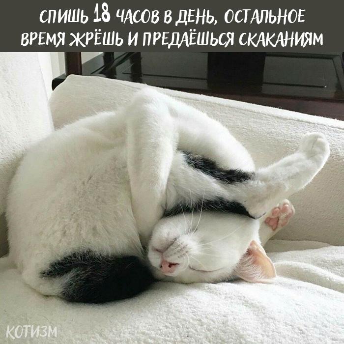 Плюсы быть котом: