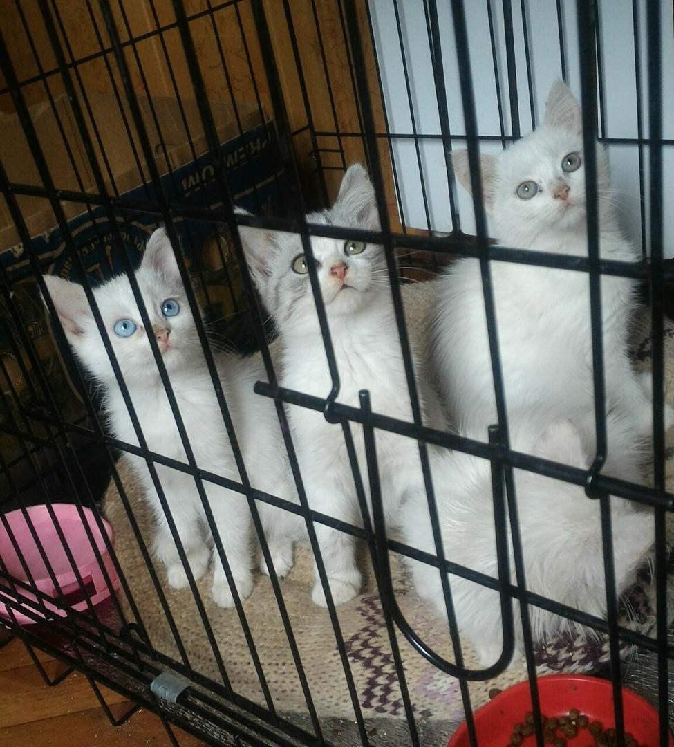 #нужна_финансовая_помощь@vmestepnz_animals #МаМуся_и_котята_
