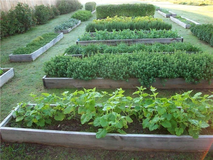 Создание теплой грядки: осенние заботы о будущем урожае, изображение №1