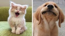 Cute baby animals - Cutest moments of puppies, kittens and pets