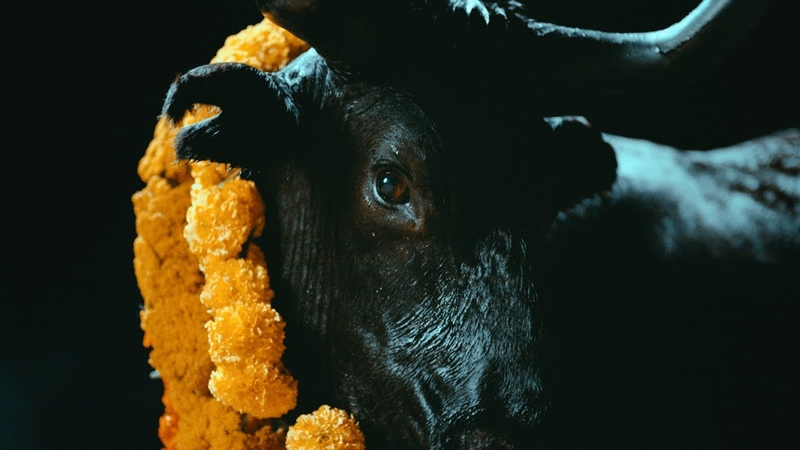FOALS - Black Bull [Official Music Video]