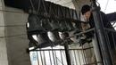 Александр Леонов Суздальский праздничный звон фестиваль Даниловские колокола 29.09.2019