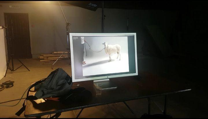 Kinodogs on Instagram Грустная песенка о барашках А вот с нашими барашками всё отлично А Вы знали что структура шерсти ов