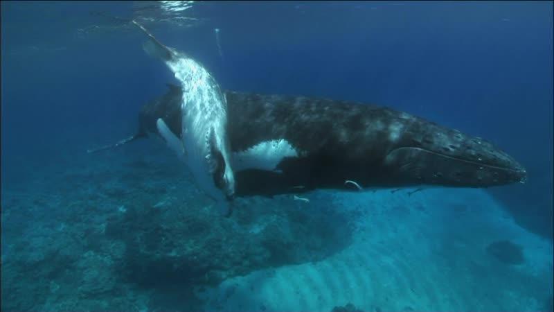 BBC Планета Земля 2006 9 серия Мелководные моря