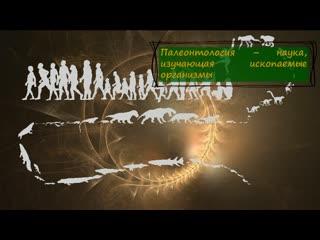 доказательства эволюции животного мира