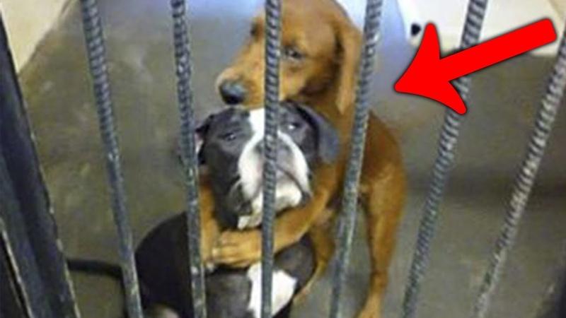 Перед усыплением эти собаки обняли друг друга и это спасло им жизнь