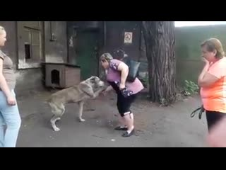 В Мариуполе похищенная собака воссоединилась с хозяевами после двухлетней разлуки