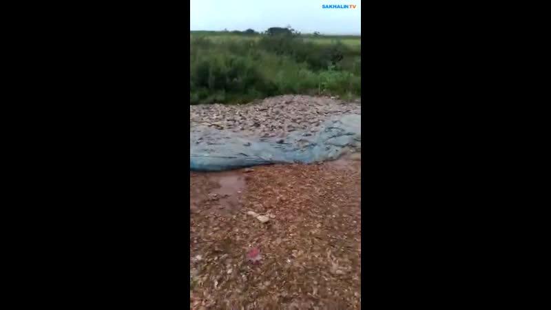 Кладбище из рыбьих голов нашел сахалинец недалеко от Найбы
