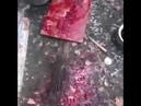 Живодер убивает собак на мясо Город Артем