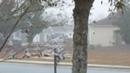 Webs Fog Collection on Trees December 9 2019