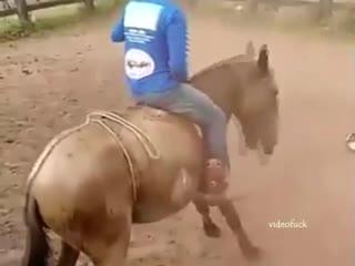 Лошадь не растерялась