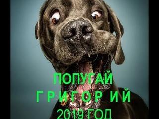 Попугай Григорий -  8 сезон,  1 серия