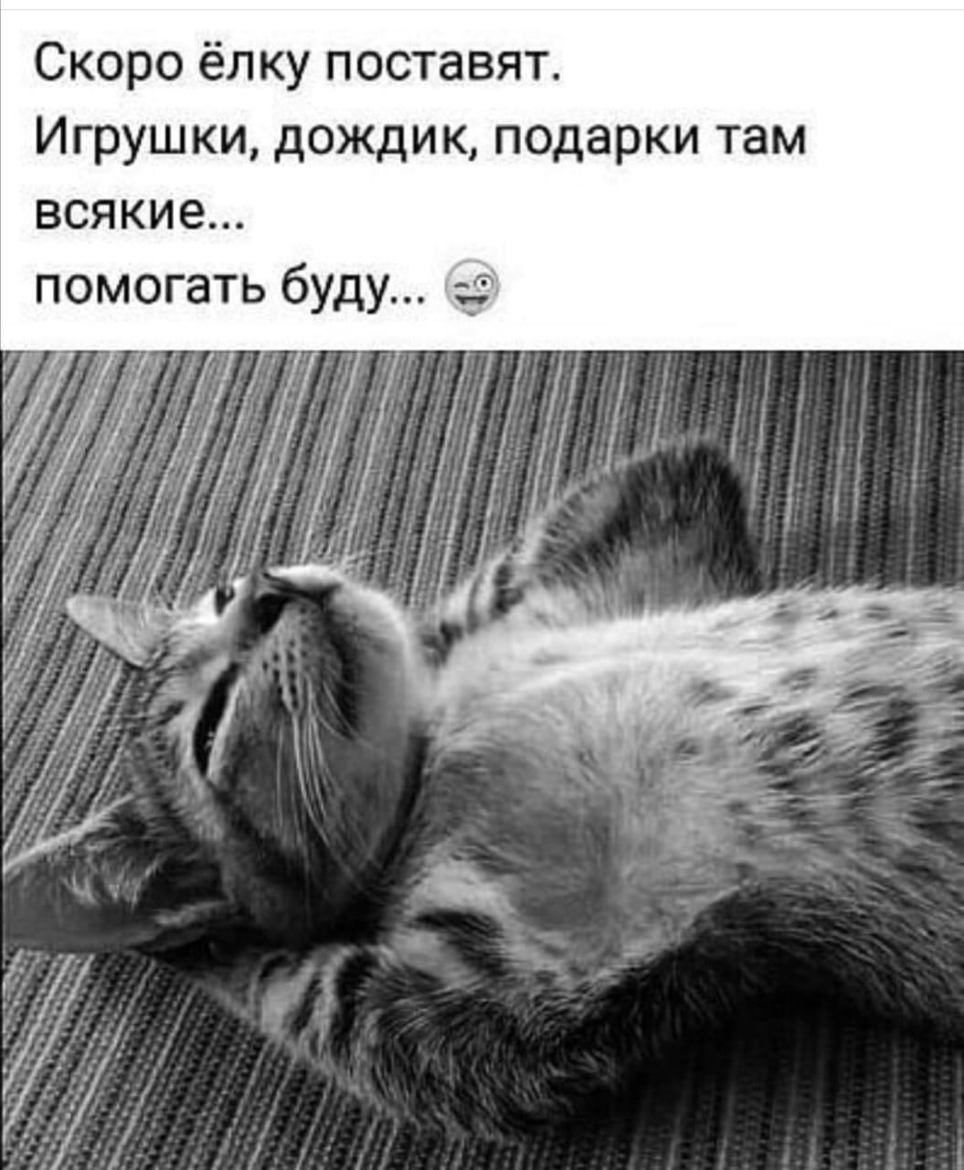 DKqm6zTUVss - А Ваши котики готовятся Вам помогать?